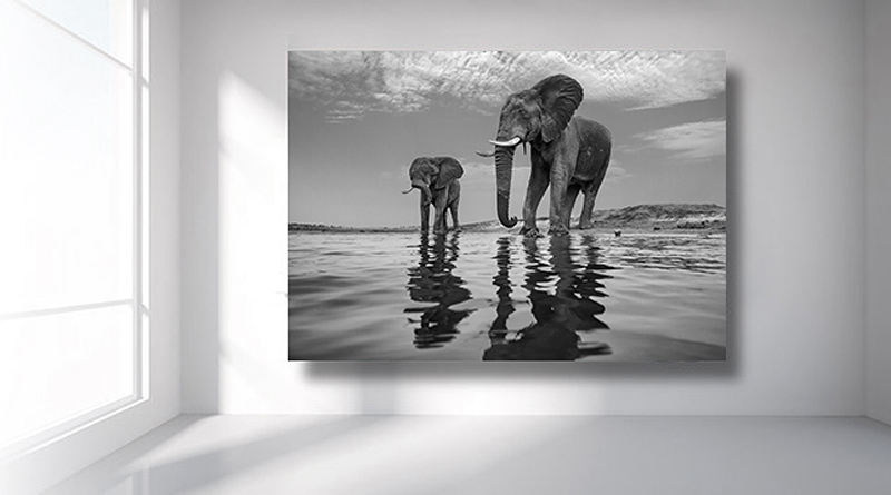 Aluminum Printed Photos of Elephants Toronto Aluminum Printing
